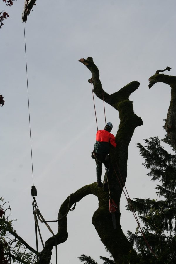 Tree Climbing Arborist Albuquerque NM