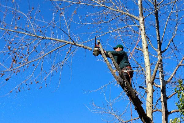 Tree Service Albuquerque NM