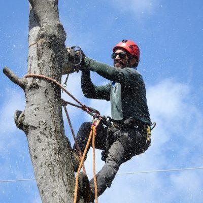 Tree Removal Service Albuquerque NM